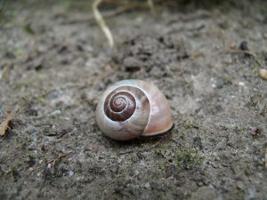 Cochlea Snail Shell - What Is A Headphone Driver - And Why It Matters